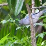 Fauna e Flora Guaratuba (10)
