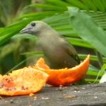 Fauna e Flora Guaratuba (11)