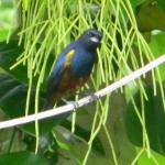 Fauna e Flora Guaratuba (12)