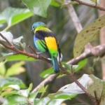 Fauna e Flora Guaratuba (13)
