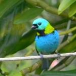 Fauna e Flora Guaratuba (14)