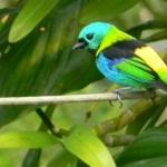 Fauna e Flora Guaratuba (15)