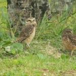 Fauna e Flora Guaratuba (2)
