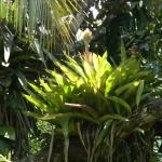 Fauna e Flora Guaratuba (22)