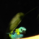 Fauna e Flora Guaratuba (23)