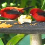 Fauna e Flora Guaratuba (36)