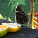 Fauna e Flora Guaratuba (37)