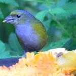 Fauna e Flora Guaratuba (38)