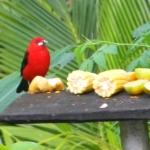 Fauna e Flora Guaratuba (40)