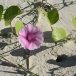 Fauna e Flora Guaratuba (46)