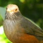 Fauna e Flora Guaratuba (50)
