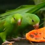 Fauna e Flora Guaratuba (9)